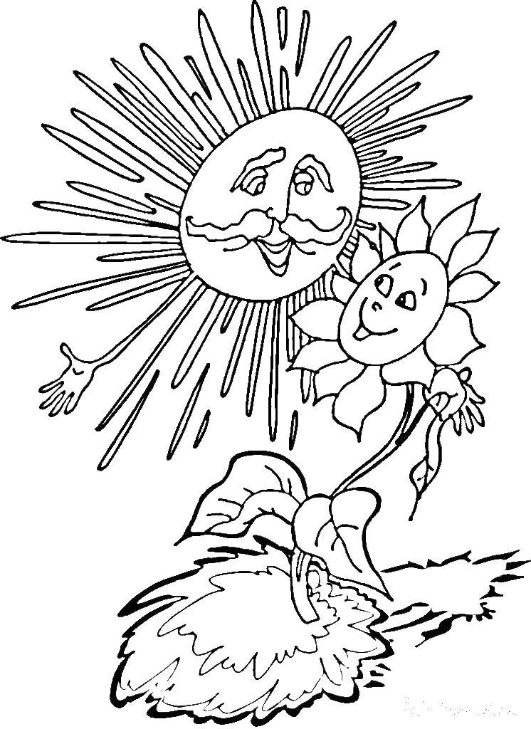 Солнце Раскраски солнце природа явление природы солнце солнечно цветок Раскраски распечатать