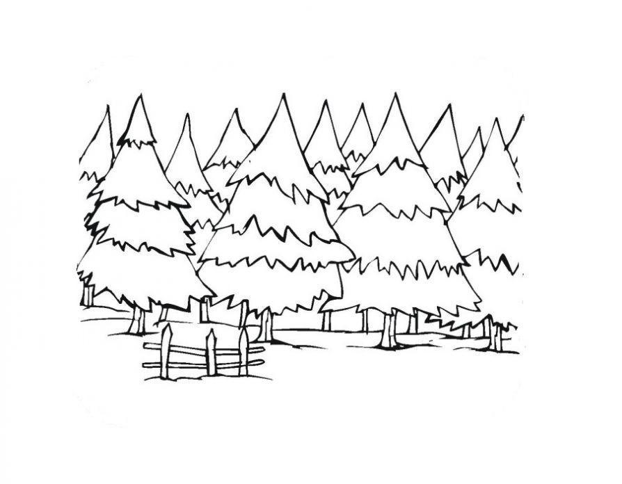 Раскраски природа раскраска лес,много елочек,красивые деревья