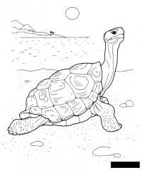 Раскраски солнце раскраска для детей, черепаха, солнце, вода, пляж