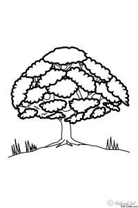 Раскраски природа раскраска дерево,красивое деревце,природа