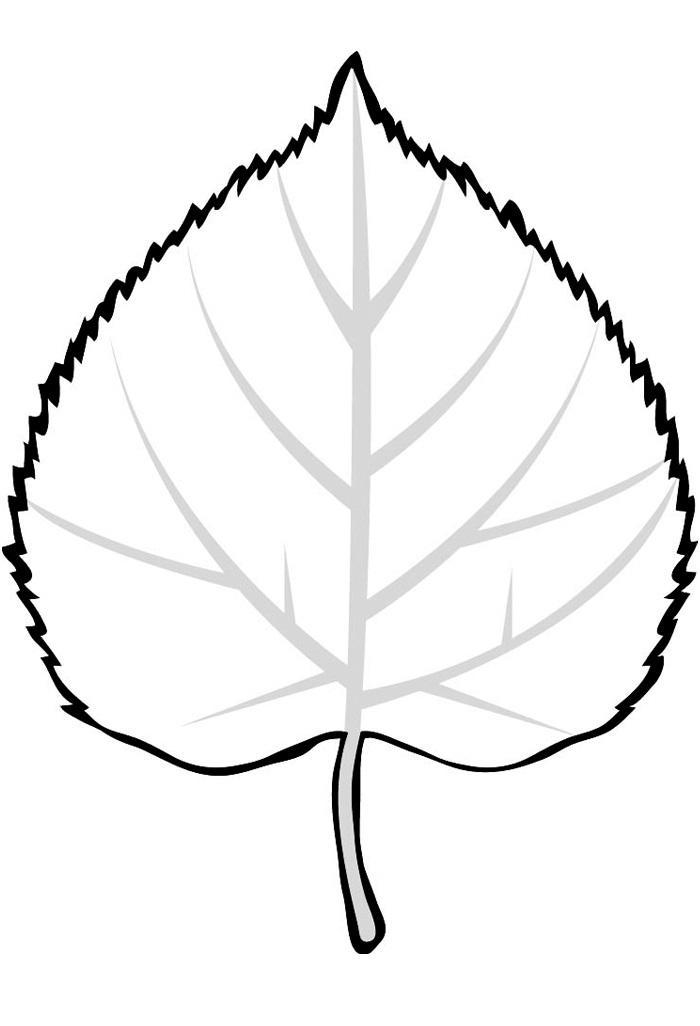 картинки листья контуры