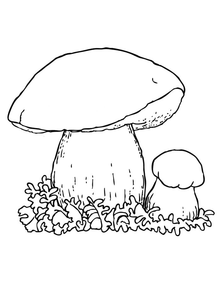 Картинки грибов раскраска