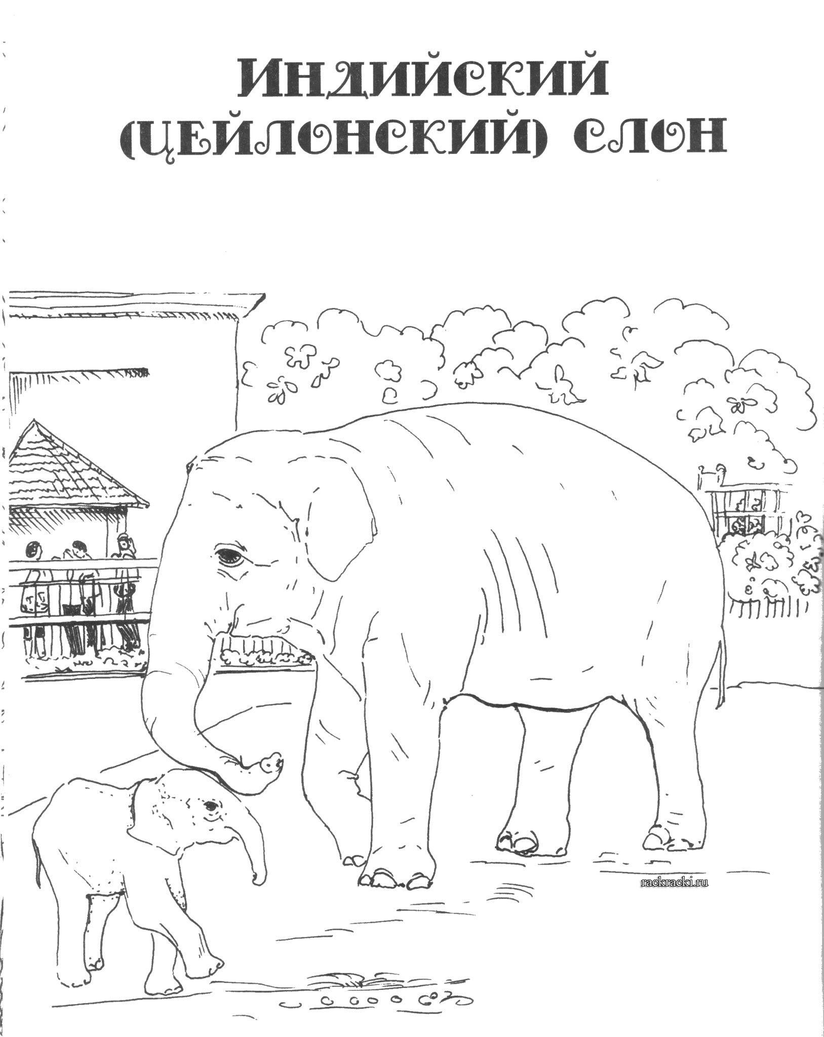 Раскраска индийский слон в jpg