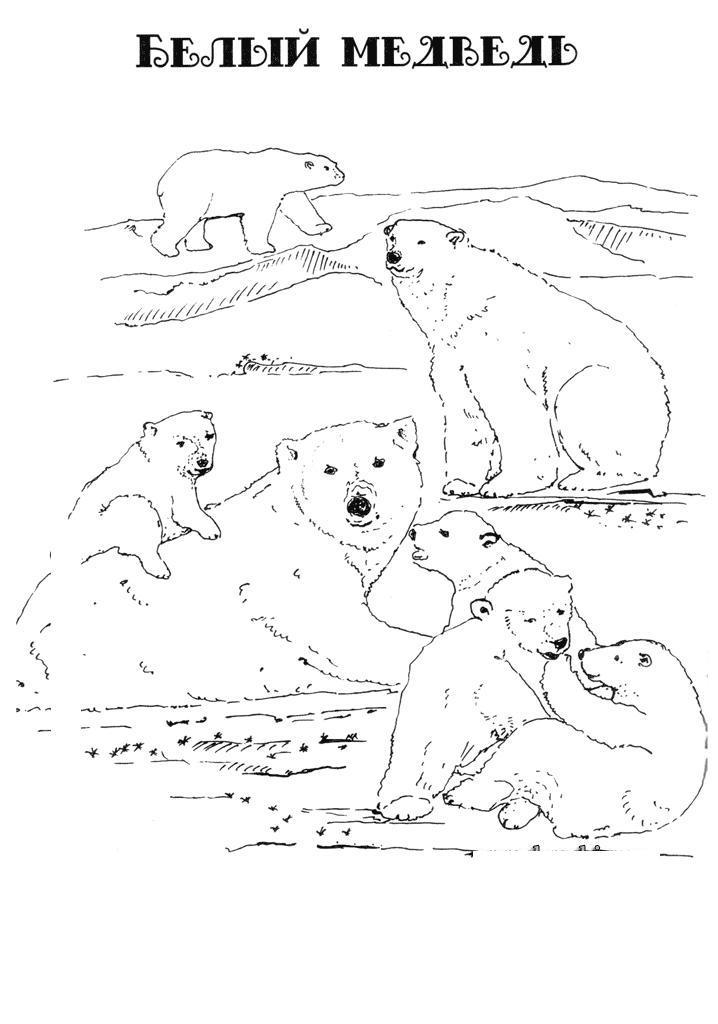 Картинка белый медведь в png