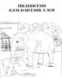Картинка индийский слон в png