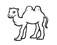 Разукрашка верблюд из зоопарка