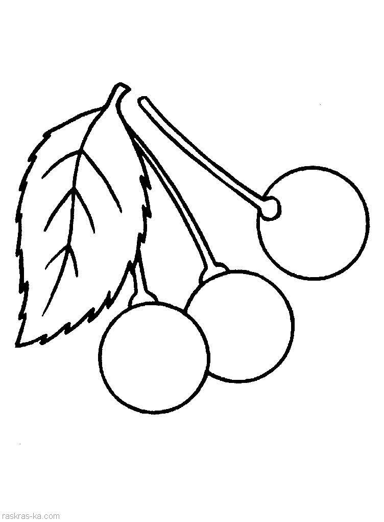 Раскраски для детей вишня