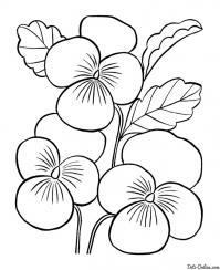 Раскраска весенние цветы маме