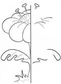 Раскраски образцу цветок дорисуй