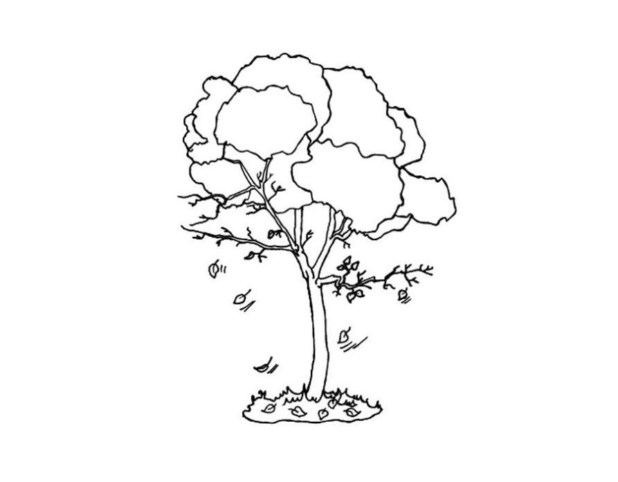 Раскраска. Деревья