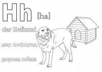 Хофхунд дворовая собака
