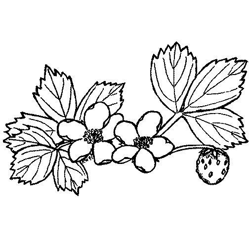 Раскраски растения раскраски растения, природа, ягоды, цветы