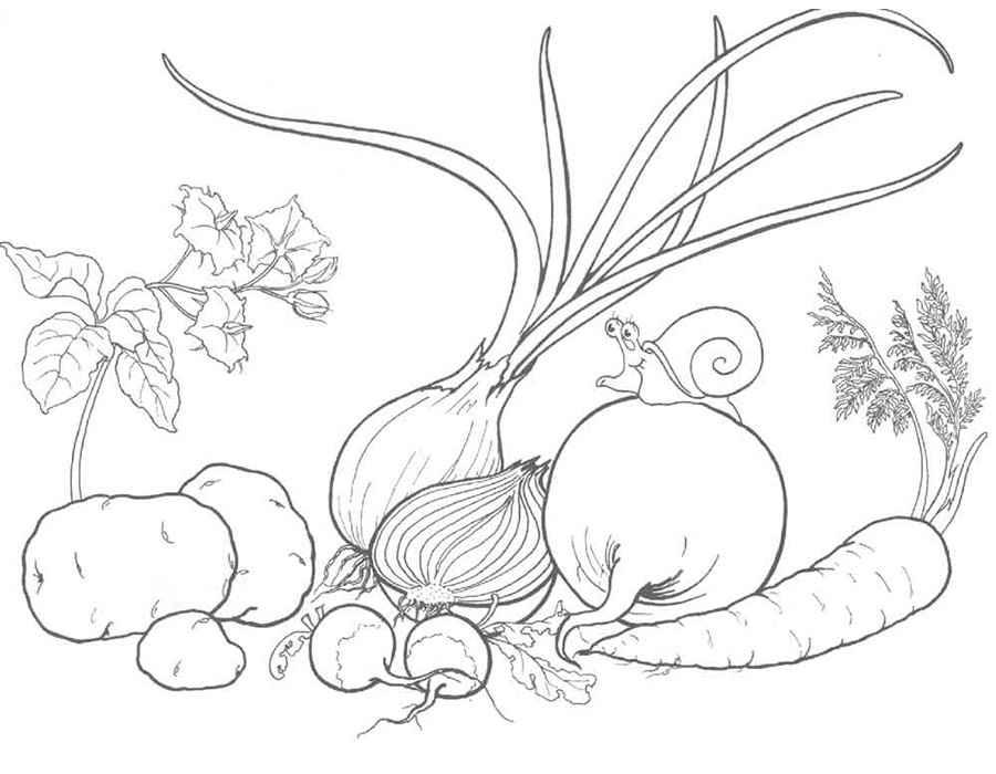 Детские раскраски для девочек и мальчиков, лук, свекла, морковь, картофель, вьюн