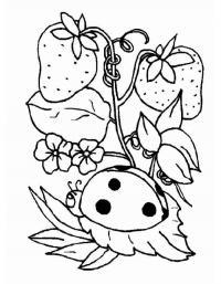 Детские раскраски для девочек и мальчиков, клубника и божья коровка