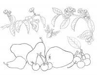 Детские раскраски для девочек и мальчиков, фрукты, цветущие ветки и пчелка