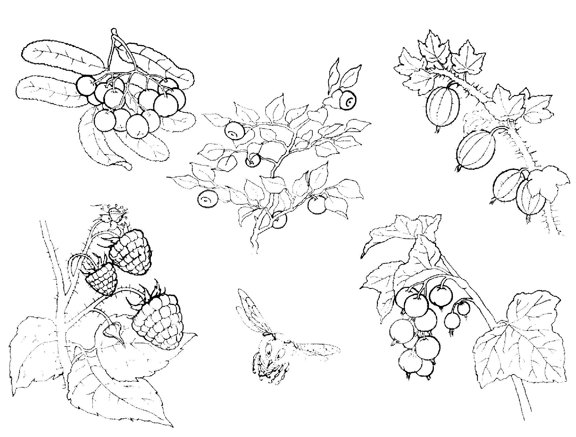Распечатать бесплатные раскраски для детей: для самых маленьких: овощи, фрукты