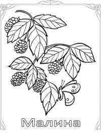 Карточки-раскраски для детей -ягоды, малина