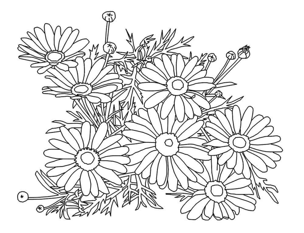 Раскраска. Цветы