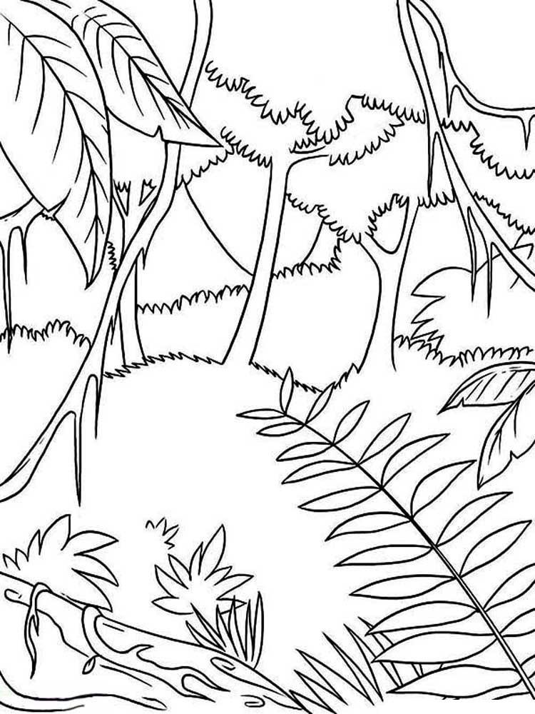 Тропические заросли, джунгли