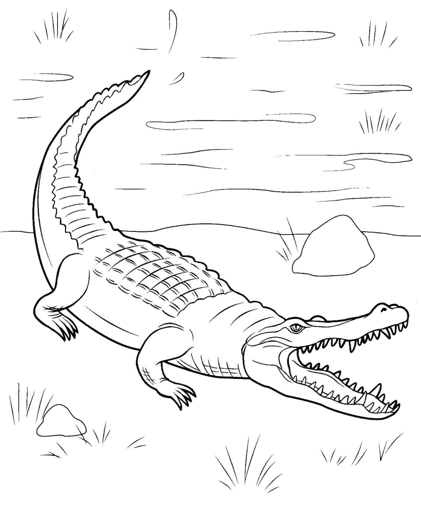 Раскраски берегу рептилии, крокодил, вода