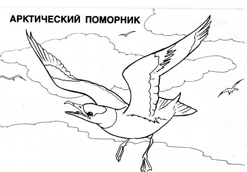 Иллюстрация 5 из 5 для мир животных: арктика (раскраска) | лабиринт - книги. источник: рива