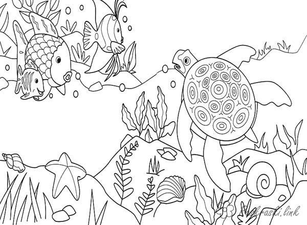 Раскраски рыба природа подводный мир черепаха рыба