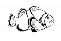 Раскраска летающая рыбка
