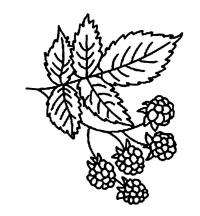 Раскраски детская детская раскраска растения