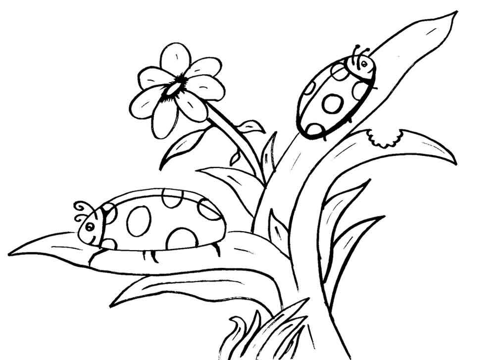 Божьи коровки на цветущем кусту