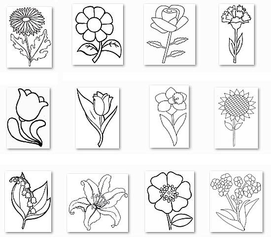 Тематическое задание для девочек - раскраска цветов Цветы