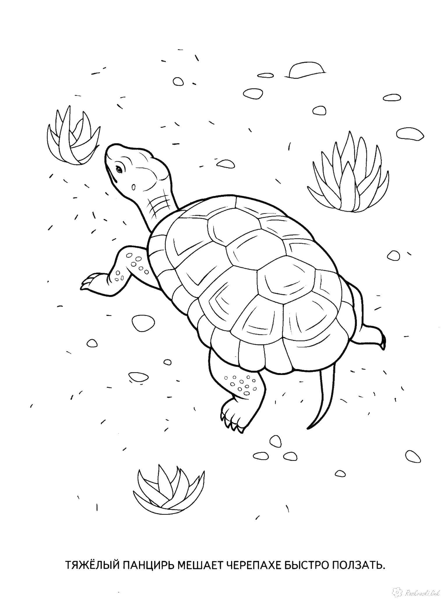 Раскраски черепаха детская раскраска рептилии, черепаха