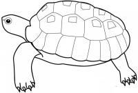 Раскраски черепаха раскраски, черепаха, для детей, рептилии