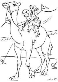 Цирк. верблюд