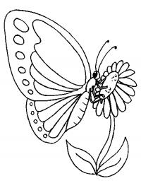 Рисунки и картинки раскраски бабочки